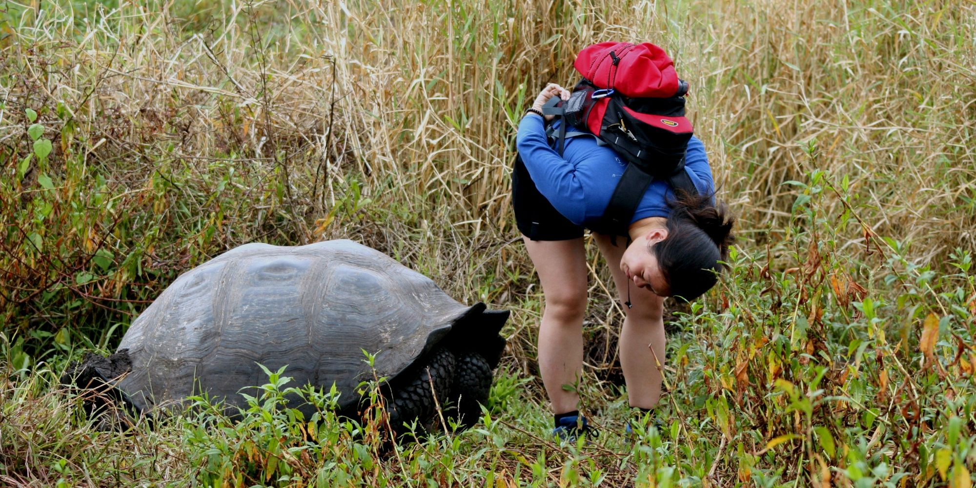 Girl on Galapagos tour looking for tortoise