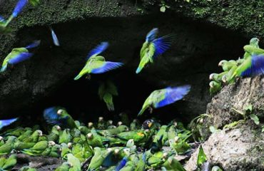 11-DIA-5-Amazon-Wildlife-Kayak-Exploration