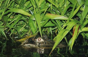 3-Day-1-Amazon-Wildlife-Kayak-Exploration