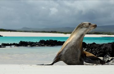 Galapagos-Wildlife-Discovery-Banner-1