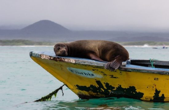 Sea lion sleeping on a boat on Wildlife tour in Galapagos Islands